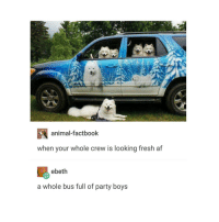 fluff: animal factbook  when your whole crew is looking fresh af  ebeth  a whole bus full of party boys fluff