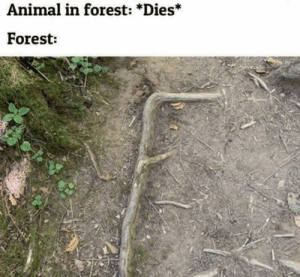 Animal, MeIRL, and Forest: Animal in forest: *Dies*  Forest: Meirl