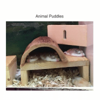 Animals, Bad, and Bad Day: Animal Puddles If your having a bad day or if you just wanted to see something like this here's a bunch of flat animals that have melted - mon textpost textposts