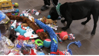 """Memes, Babes, and Iowa: Animal Rescue League of Iowa ........"""" It's not quite Christmas yet, but we let some of our adoptable cats and dogs pick out a toy from our Tree of Life to take back to their kennel a few days early - and they loved it! You can donate to our Tree of Life through the end of the month, but what these babes are really wishing for is a new home - so adopt today!"""" #Beautiful"""