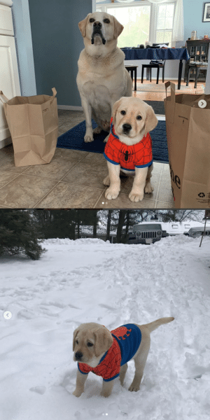 animalrates:  This is Apollo and his stepdaughter Juno. They went shopping for something to keep Juno warm in the snow and this is all they could find. 13/10 for both‬ (@juno_verse) - (via): animalrates:  This is Apollo and his stepdaughter Juno. They went shopping for something to keep Juno warm in the snow and this is all they could find. 13/10 for both‬ (@juno_verse) - (via)