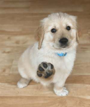 animalrates:  This is Ringo. He appreciates your urge to pet him, but respectfully asks you to keep your distance until this is all over. 12/10 I will do my best sir(via): animalrates:  This is Ringo. He appreciates your urge to pet him, but respectfully asks you to keep your distance until this is all over. 12/10 I will do my best sir(via)