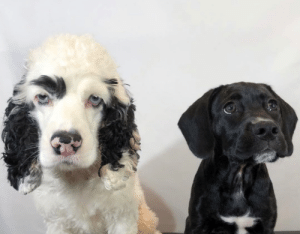 animalrates:  This is Snoop and his little sister Remi. Remi shaved off Snoop's eyebrow while he was sleeping. Thought it would be funny. Still 13/10 for both‬ (@browsnoop & @remirunswild) - (via): animalrates:  This is Snoop and his little sister Remi. Remi shaved off Snoop's eyebrow while he was sleeping. Thought it would be funny. Still 13/10 for both‬ (@browsnoop & @remirunswild) - (via)