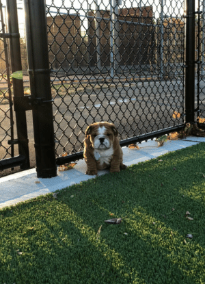 animalrates:This is Tonka. It's his first time at the park and he's a little shy. Was wondering if you'd be his friend. 12/10 I've never wanted anything so bad: animalrates:This is Tonka. It's his first time at the park and he's a little shy. Was wondering if you'd be his friend. 12/10 I've never wanted anything so bad