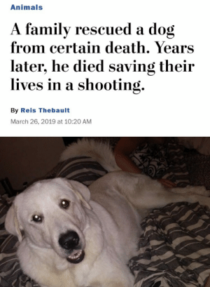 What a heroic dog: Animals  A familv rescued a dog  from certain death. Years  later, he died saving their  lives in a shooting.  By Reis Thebault  March 26, 2019 at 10:20 AM What a heroic dog