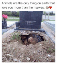 Memes, Earth, and 🤖: Animals are the only thing on earth that  love you more than themselves Oh my goodness.. 💔❤️ How sweet and sad at the same time!!! This is so true.. Animals truly love us unconditionally.. Swyd and follow this amazing woman right now!! @sweetpsych0 💕✨ @sweetpsych0 💕 @sweetpsych0 💕 @sweetpsych0 💕 @sweetpsych0 💕 love dogs dogstagram sweet cute truelove bestfriends bffs 🐶 nochill
