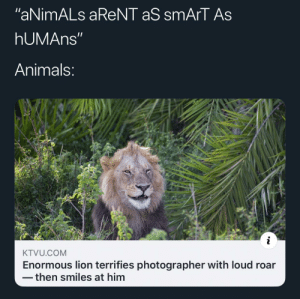 "We don't give animals the credit they deserve: ""aNimALs aReNT aS smArT As  hUMAns""  Animals:  KTVU.COM  Enormous lion terrifies photographer with loud roar  then smiles at him We don't give animals the credit they deserve"