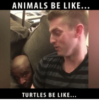 Memes, 🤖, and Turtles: ANIMALS BE LIKE.  TURTLES BE LIKE. Animals be like... Frrom @80fitz -w- @jaywalkr __________________________________________________ Damndaniel Goteem DeadAss ThatShitHurted B Facts hellnawtothenawnawnaw ohdontdoit OhMyGod WTF ohshit WHODIDTHIS imdone REALLYBITCH NIGGASAINTSHIT NewYorkersBelike nochill NIGGASBELIKE BITCHESBELIKE blackpeoplebelike whitepeoplebelike BiggasBestBuys