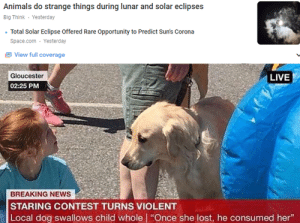 "Animals, News, and Lost: Animals do strange things during lunar and solar eclipses  Big Think Yesterday  Total Solar Eclipse Offered Rare Opportunity to Predict Sun's Corona  Space.com Yesterday  View full coverage  Gloucester  LIVE  02:25 PM  BREAKING NEWS  STARING CONTEST TURNS VIOLENT  |Local dog swallows child whole | ""Once she lost, he consumed her"" Same honestly"