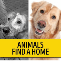 Animals, Family, and Memes: ANIMALS  FIND A HOME So amazing to see the transformation from sad to happy when they are adopted into a loving home and they know they have a forever family! #AdoptShelterDogs #SavingaLifeIsPriceless #NewBestFriend