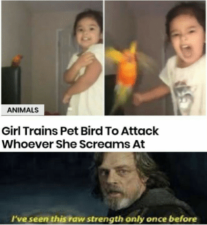 Animals, Disney, and Girl: ANIMALS  Girl Trains Pet Bird To Attack  Whoever She Screams At  l've seen this raw strength only once before When a Disney Princess joins the dark world