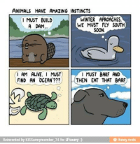 barf: ANIMALS HAVE AMAZING INSTINCTS  WINTER APROACHES.  I MUST BUILD  WE MUST FLY SOUTH  A DAM...  SOON  I MUST BARF AND  I AM ALIVE  I MUST  FIND AN OCEAN  l THEN EAT THAT BARE  Reinvented by KISSarmym ember 74 for iFunny  ifunny mobil
