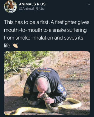 Animals, Life, and Animal: ANIMALS R US  @Animal_R_Us  This has to be a first. A firefighter gives  mouth-to-mouth to a snake suffering  from smoke inhalation and saves its  life.  PHELA WHOLESOME. Another life saved bois.