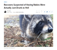Me IRL: ANIMALS  Raccoons Suspected of Having Rabies Were  Actually Just Drunk as Hell  Catie Keck  Today 1:15am . Filed to: DRUNK RACCOONS﹀  31.5K 24 1f  Photo: Mlton Police Department Me IRL