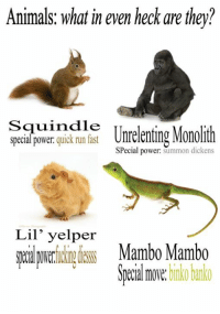 Animals, Run, and Animal: Animals: what in even heck are they?  Squindie  special power  quick run fast  Unrelenting Monollth  Special power  summon dickens  Lil' yelper  Mambo Mambo  move.  binko banko an aninals meme to wet your whislte