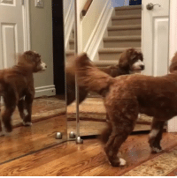 @animalsdoingthings will make your day. Every video is amazing. Just look at this cute pooch @jolenethedollydoodle: @animalsdoingthings will make your day. Every video is amazing. Just look at this cute pooch @jolenethedollydoodle