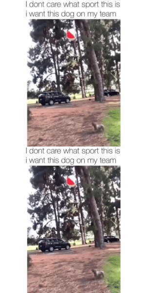 animalsnaps:  13/10 my new favorite sport. But what should it be called?via @siralec.thefrenchie: animalsnaps:  13/10 my new favorite sport. But what should it be called?via @siralec.thefrenchie