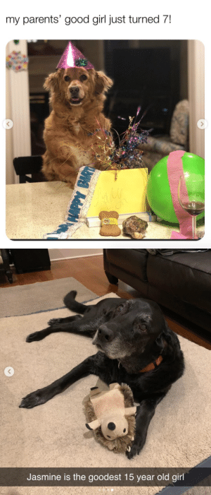 animalsnaps: Animal snaps via: Turned 7: @oh_what_a_lady & jasmine: reddit u/Genetha : animalsnaps: Animal snaps via: Turned 7: @oh_what_a_lady & jasmine: reddit u/Genetha