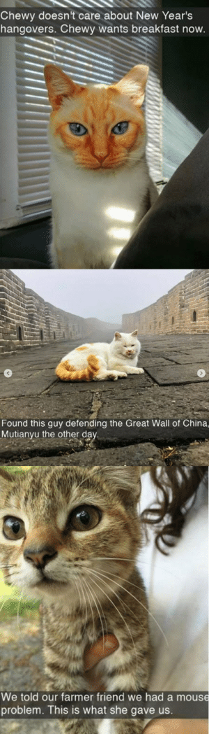 animalsnaps:  Cat snaps: animalsnaps:  Cat snaps