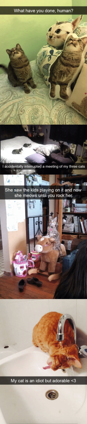 animalsnaps:  Hilarious Cat Snapchats (Part 3)(via): animalsnaps:  Hilarious Cat Snapchats (Part 3)(via)