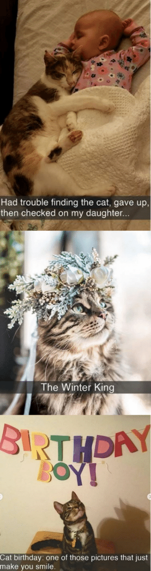 animalsnaps:  More cat snaps: animalsnaps:  More cat snaps