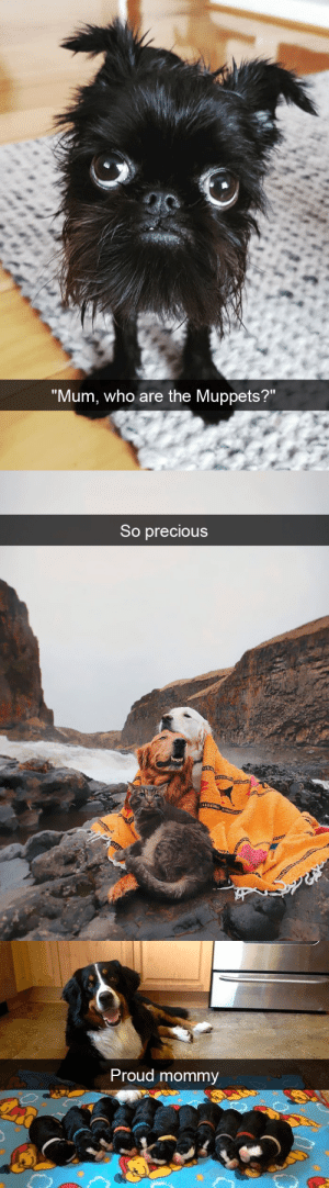 animalsnaps:  More dog snaps: animalsnaps:  More dog snaps