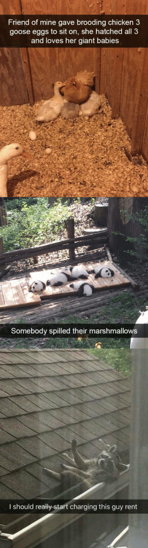 animalsnaps:  More snaps of animals: animalsnaps:  More snaps of animals