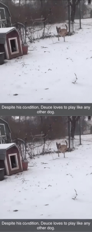animalsnaps: We love you Deuce via @2legdogs : animalsnaps: We love you Deuce via @2legdogs