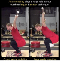 Gym, Memes, and Affect: Ankle mobility plays a huge role in your  overhead squat  & snatch technique!  Good ankle mobility  Poor ankle mobility Stiff ankles are one of the most common weak links I find in athletes. This issue will cause problems for the entire movement pattern of the squat. Let's take for example the overhead squat. This lift (just like the snatch) requires a fairly upright torso position. The more upright our torso must be during a squat - the more ankle mobility we require in order to stay balanced & move efficiently. The squat on the right is demonstrating how limited ankle mobility can affect this lift. In an effort to stay balanced, the chest will have to incline forward. In order to continue squatting down, the bar must be pushed even further back behind the neck or else the weights will surely come crashing down in front. The left video is showing an example of adequate ankle mobility. Because the knee is able to move forward past the toes at the bottom of the squat, the chest can remain more upright and the bar remains balanced. ---------------- Squat University is the ultimate guide to realizing the strength to which the body is capable of. The information within these pages are provided to empower you to become a master of your physical body. Through these teachings you will find what is required in order to rid yourself of pain, decrease risk for injury, and improve your strength and athletic performance. __________________________________ Squat SquatUniversity Powerlifting weightlifting crossfit training wod workout gym fit fitfam fitness fitspo oly olympicweightlifting hookgrip mobility USAW physicaltherapy lifting crossfitter motivation