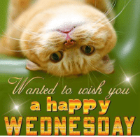 Happy Wednesday, everyone! It's Hump Day so enjoy yourselves and have a great day! :): anled lo you  a happy  WEDNESDAY Happy Wednesday, everyone! It's Hump Day so enjoy yourselves and have a great day! :)