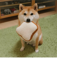 You have found the shibe of good breakfast: annei You have found the shibe of good breakfast