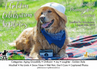 """Memes, Social Media, and Hair: Annual  Photography  Contest  Deadline For Submissionss  August 30th, 2018  Golden  Rescue  Categories: Aging Gracefully. Chillaxin Joy Laughter- Golden Style  Mischief. No Limits. Snow Nose Wet Hair, Don't Care. Captioned Photos Get your cameras and your Goldens ready! It's that time of year again! Time for the Golden Rescue Annual Picnic Photo Contest: """"A Golden Celebration in Photos""""   Here are the categories for submissions:  Aging Gracefully Chilaxin' Joy Laughter - Golden Style Mischief No Limits Snow Nose Wet Hair, Don't Care Captioned Photos  Guidelines: - Photos of any Golden are welcome - Entries for multiple categories will be accepted - One photo per category - A single photo may not be entered in more than one category - Entrant must provide the caption for the """"Captioned Photos""""   Please send photo entries to: photocontest@goldenrescue.ca Please include the name of the photographer, the name of your Golden and their rescue number, if applicable.  Deadline for submissions: August 30th, 2018  Winners will be announced at the Golden Rescue Picnic September 15th, 2018 at Viamede Resort and featured on social media!  #goldenretriever #adoptdontshop #rescuedog #photocontest"""
