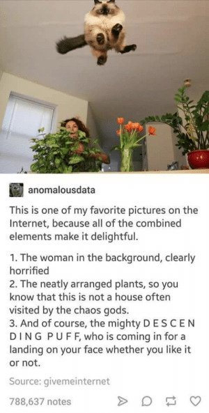 Internet, House, and Pictures: anomalousdata  This is one of my favorite pictures on the  Internet, because all of the combined  elements make it delightful.  1. The woman in the background, clearly  horrified  2. The neatly arranged plants, so you  know that this is not a house often  visited by the chaos gods.  3. And of course, the mighty D ESCEN  DING P U F F, who is coming in for a  landing on your face whether you like it  or not.  Source: givemeinternet  788,637 notes Descending Floof