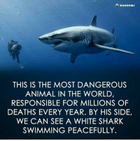 cnn.com, Illuminati, and Love: anonew  THIS IS THE MOST DANGEROUS  ANIMAL IN THE WORLD,  RESPONSIBLE FOR MILLIONS OF  DEATHS EVERY YEAR. BY HIS SIDE,  WE CAN SEE A WHITE SHARK  SWIMMING PEACEFULLY. hit like if you agree ☝. humans are the mass weapon on destruction. repost 👉 @anonymiss_azerbaijani. ---------- Anonymous Army_anons Revolution CNN News foxnews donaldtrump satan Education Corruption Illuminati iraq libya palestine islam activist FreePalestine NoChildinWar Islamophobia War Politics illuminateworldtour pizzagate freedom Love syrianhamster syrian Yemen EndTheOccupation Israel follow 👉 @army_anons follow 👉 @army_anons follow 👉 @army_anons