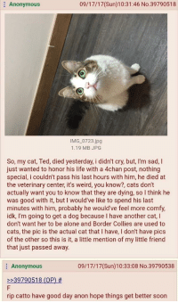 """4chan, Being Alone, and Cats: Anonymous  09/17/17(Sun)10:31:46 No.39790518  IMG 0723.jpg  1.19 MB JPG  So, my cat, Ted, died yesterday, i didn't cry, but, I'm sad, I  just wanted to honor his life with a 4chan post, nothing  special, i couldn't pass his last hours with him, he died at  the veterinary center, it's weird, you know?, cats don't  actually want you to know that they are dying, so I think he  was good with it, but I would've like to spend his last  minutes with him, probably he would've feel more comfy,  idk, I'm going to get a dog because I have another cat, l  don't want her to be alone and Border Collies are used to  cats, the pic is the actual cat that I have, I don't have pics  of the other so this is it, a little mention of my little friend  that just passed away.  09/17/17(Sun)10:33:08 No.39790538  Anonymous  2239790518 (OP) #  rip catto have good day anon hope things get better soon <p>Wholesome 4chan via /r/wholesomememes <a href=""""http://ift.tt/2fbA4PY"""">http://ift.tt/2fbA4PY</a></p>"""