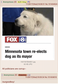 """4chan, News, and Anonymous: Anonymous (ID: 8LR++Hmg  11/29/17(Wed)19:06:51 No.151404524  FOX /8  NEWS  Minnesota town re-elects  dog as its mayor  1507357894801.jpg  82 KB JPG  All politicians are corrup--  : Anonymous (ID: eGdu4ућ0)  11/29/17(Wed)19:09:34 No.151404816  lourgoodboy/ <p>Wholesome 4chan via /r/wholesomememes <a href=""""http://ift.tt/2zCPHbG"""">http://ift.tt/2zCPHbG</a></p>"""