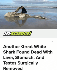 "Africa, Memes, and Orcas: Another Great White  Shark Found Dead With  Liver, Stomach, And  Testes Surgically  Removed Something odd is going on off the shores of South Africa. Several deceased great white sharks are turning up along a stretch of coastline with their livers quite precisely removed from their carcasses; two of them were also missing their hearts. After a brief bit of sleuthing by marine conservationists, the finger was pointed squarely at orcas. Now it appears they have struck again: a fourth great white has been found lacking its liver on the same stretch of coastline. Once again, the organ was removed with ""surgical precision""."
