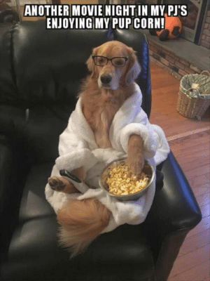 Animals, Dogs, and Memes: ANOTHER MOVIE NIGHTIN MY PJ'S  ENJOYING MY PUP CORN! Dog Memes Of The Day 30 Pics – Ep36 #dogs #doglovers #lovelyanimalsworld - Lovely Animals World