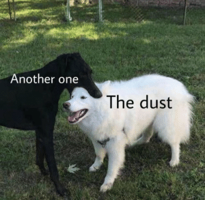 Another One, Tumblr, and Blog: Another one  The dust dogg:   dun dun dun dun