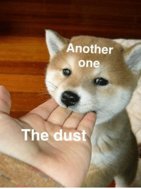Another One, Another, and One: Another  one  The dust Pupper chomp