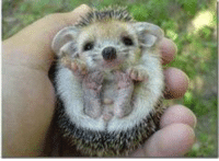 Another wonderfully cute animal to add to the collection. LOOK AT ITTT ! - MJ.: Another wonderfully cute animal to add to the collection. LOOK AT ITTT ! - MJ.