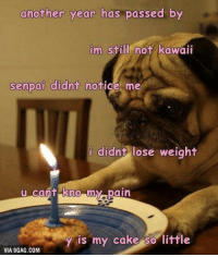 9gag, Birthday, and Memes: another year has passed by  im still not kawaii  senpai didnt notice me  i didnt lose weight  u cant kno my pain  y is my cake so little  VIA 9GAG.COM Don't worry you're a kawaii potato. @9gagmobile 9gag pug birthday
