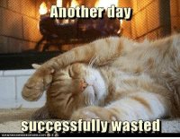 Sounds about right! :): Anotherday  successfully wasted  TCANTHRSCHEEZEURGER.COM Sounds about right! :)