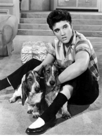 Answer to yesterdays Trivia Question.  Elvis Presley had a hit with the song 'Hound Dog' in the year C) 1956: Answer to yesterdays Trivia Question.  Elvis Presley had a hit with the song 'Hound Dog' in the year C) 1956