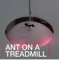 Memes, Help, and Navigation: ANT ON A  TREADMILL 17 FEB: Scientists from the University of Freiburg have designed a treadmill specifically for ants - with the aim of unveiling their navigation secrets. Their research, published in the Journal of Experimental Biology, could help in the development of miniature robots. Find out more about insect-inspired technology: bbc.in-insect Robotics Ants DesertAnts Insects Technology Navigation UniversityOfFreiburg BBCShorts @BBCNews BBCNews