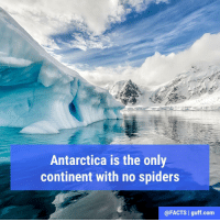 Tag your friends with arachnophobia and let them know where their next vacation needs to be...: Antarctica is the only  continent with no spiders  @FACTS I guff.com Tag your friends with arachnophobia and let them know where their next vacation needs to be...