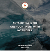 """Take me there now, it's not safe here! — """"Continent"""" not country.: ANTARCTICA IS THE  ONLY CONTINENT WITH  NO SPIDERS.  THE MORE YOU KNOW  @FACT BOLT Take me there now, it's not safe here! — """"Continent"""" not country."""