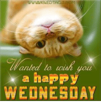 happy wednesday: anted to  a happy  WEDNESDAY