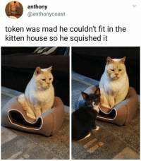 Memes, House, and Mad: anthony  @anthonycoast  token was mad he couldn't fit in the  kitten house so he squished it  t衝 I feel his pain. | Follow @aranjevi for more!