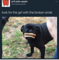 I don't know why I am laughing so hard at this: anti joke apple  @antijokeapple  look for the girl with the broken smile I don't know why I am laughing so hard at this